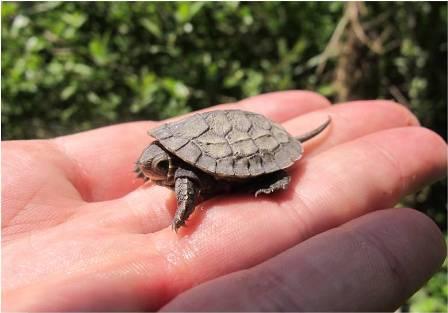 Regionalna radionica o riječnoj kornjači