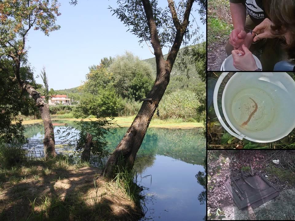 Projekt zaštite čovječje ribice u Prudu